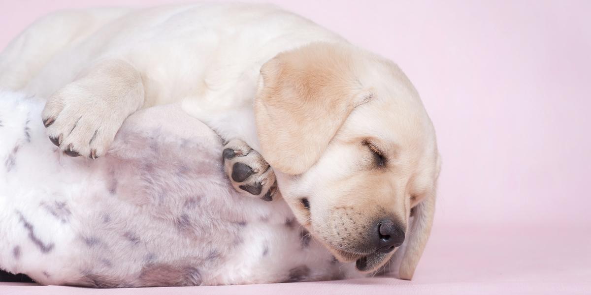 dog-groomer-2